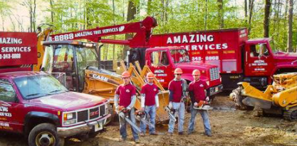 Informative Blog about Hiring the Right Tree Company
